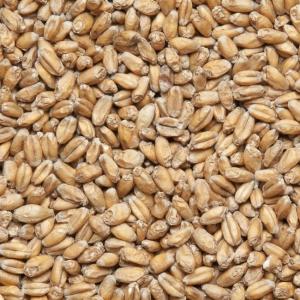 Солод Avangard Wheat Malt (пшеничный), AVANGARD MALZ, Германия 100 гр.